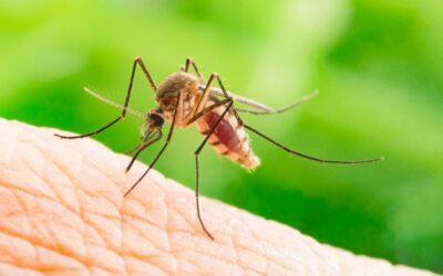 Malaria vaccine breakthrough